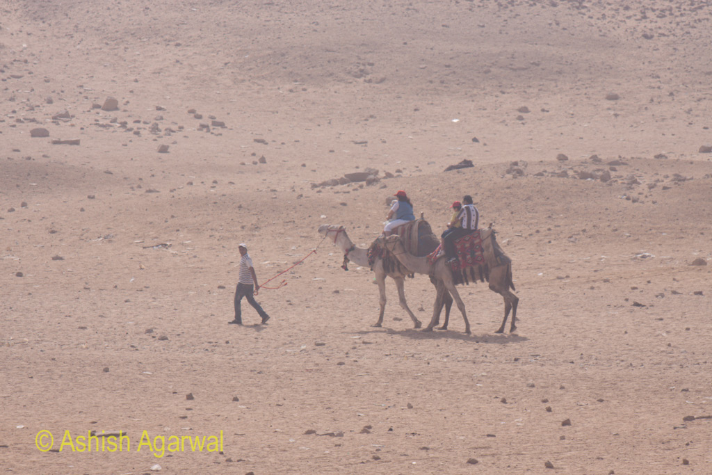 Person leading tourists on camels at the Panorama point in Giza, in the desert very close to the Great Pyramids