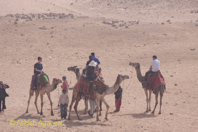 Cairo Desert - Camels along with tourists in the desert close to the Pyramids in Giza