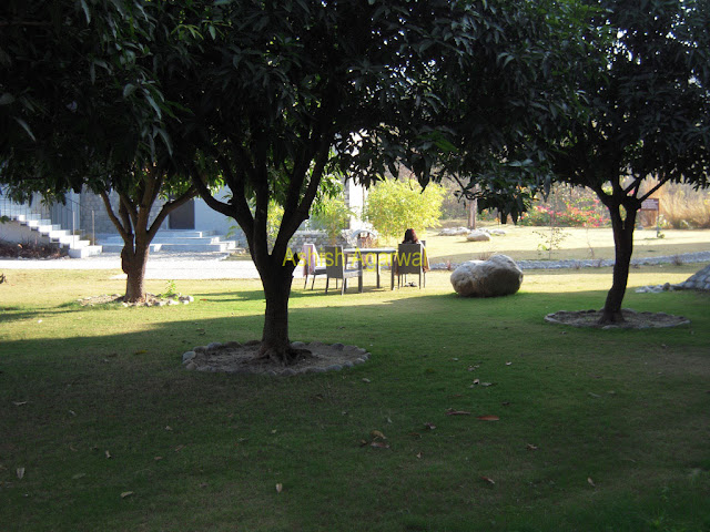 Trees and greenery inside the Club Mahindra resot at Corbett National Park in North India