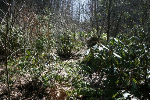 how to clear land of small trees and brush