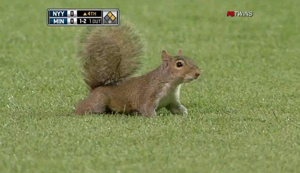 Squirrel Target Target field squirrel, friend