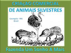 Produçao de Animais Silvestres