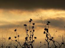 Cardos y nubes
