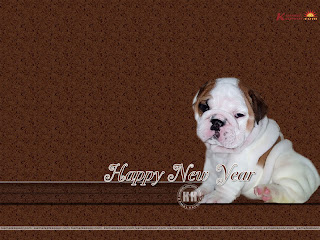 Cute New Year Wallpaper