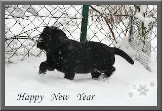 happy new year puppy pictures