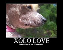 Xolo Love