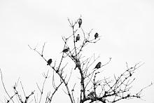 cabeza a pájaros