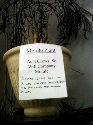 morale plant bad job