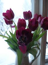 Vackra tulpaner