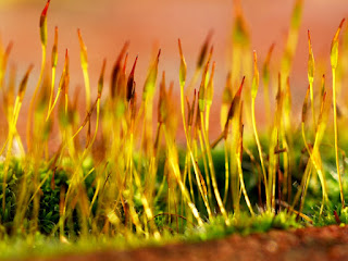 wallpapper_grass
