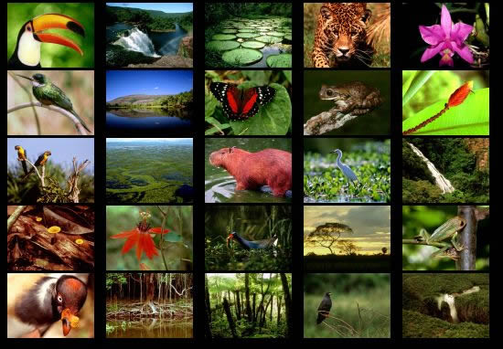 Animals of the rainforest collage