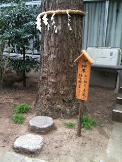 越谷市大沢香取神社の御神木