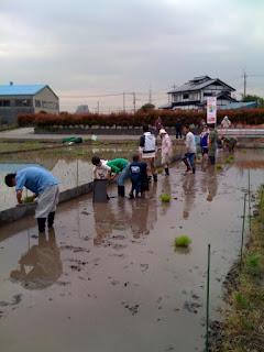越谷市鴨ネギ鍋の田植え&稲刈り農業体験練習