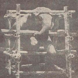 Esta es la jaula de troncos (corral de doma) el elefante es obligado a apoyarse sobre sus patas