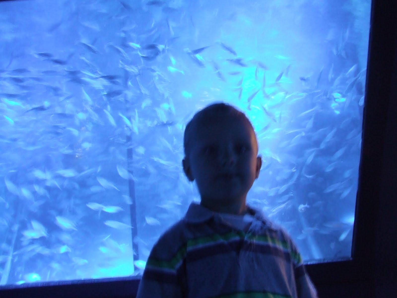 The Timmons Family Sea Life Aquarium Legoland Ca