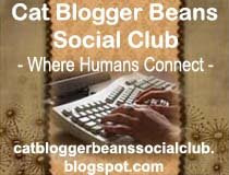 Cat Blogger Beans Social Club