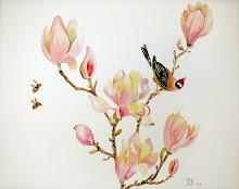 Magnolia (te koop)