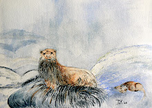 Otter (te koop)