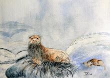 Otter (te koop)