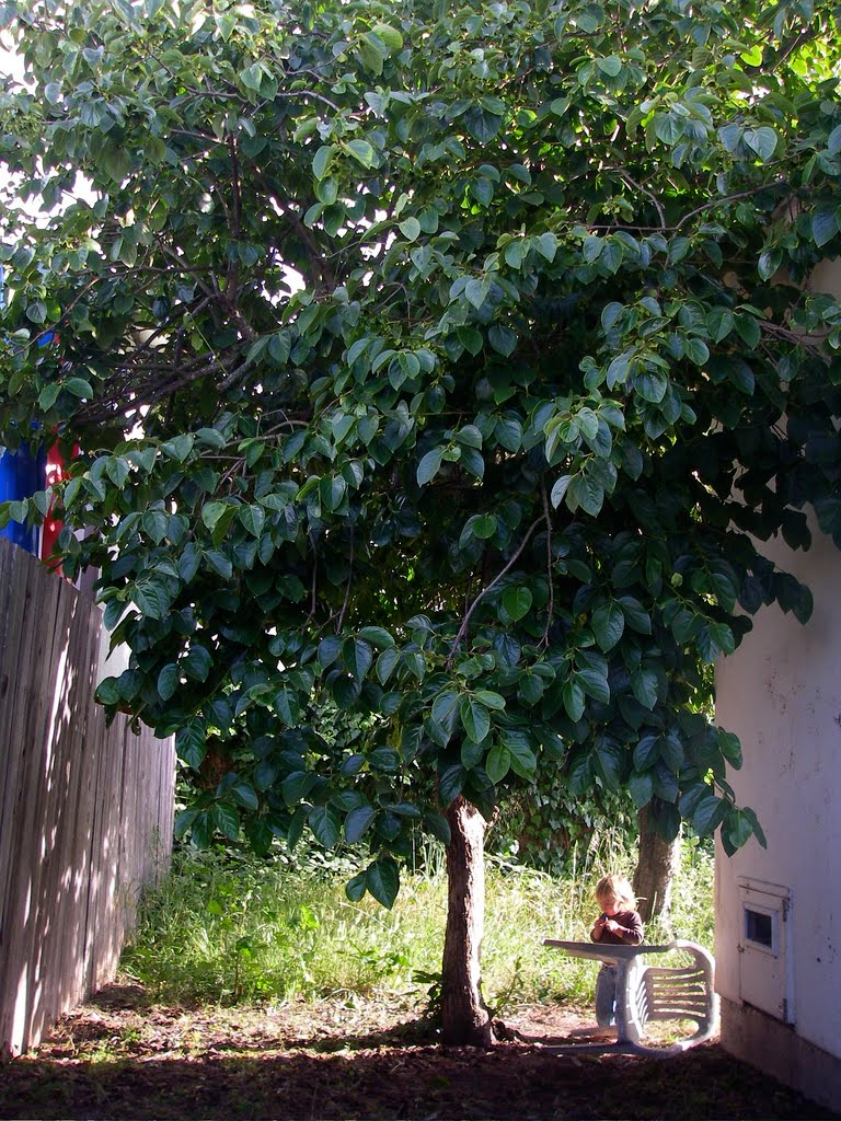 Tree Identification: D...