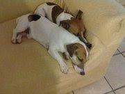 ...::Arturo e Camilla::..