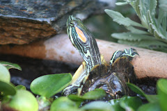Please Meet Turtle Friend
