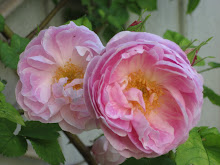 &#39;Bourbon Queen&#39;