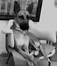 Il Principino...