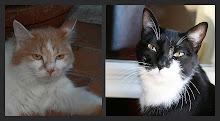 Amici Gatti: Zelda e Otto
