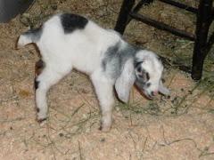 Newborn Gus