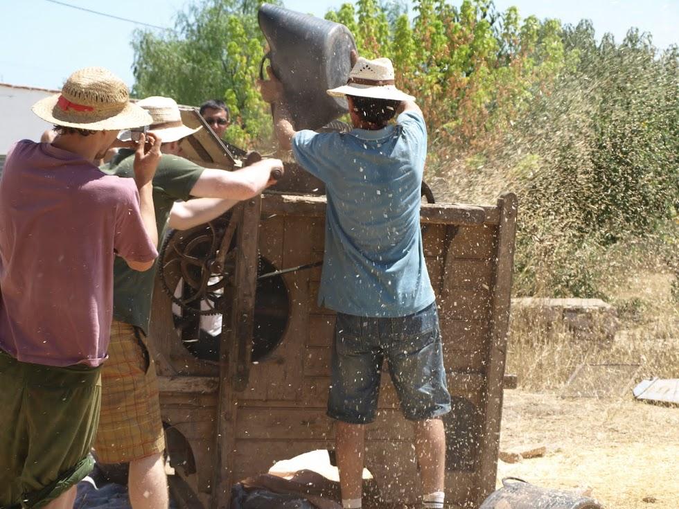 Trillant el blat - netejant amb màquina