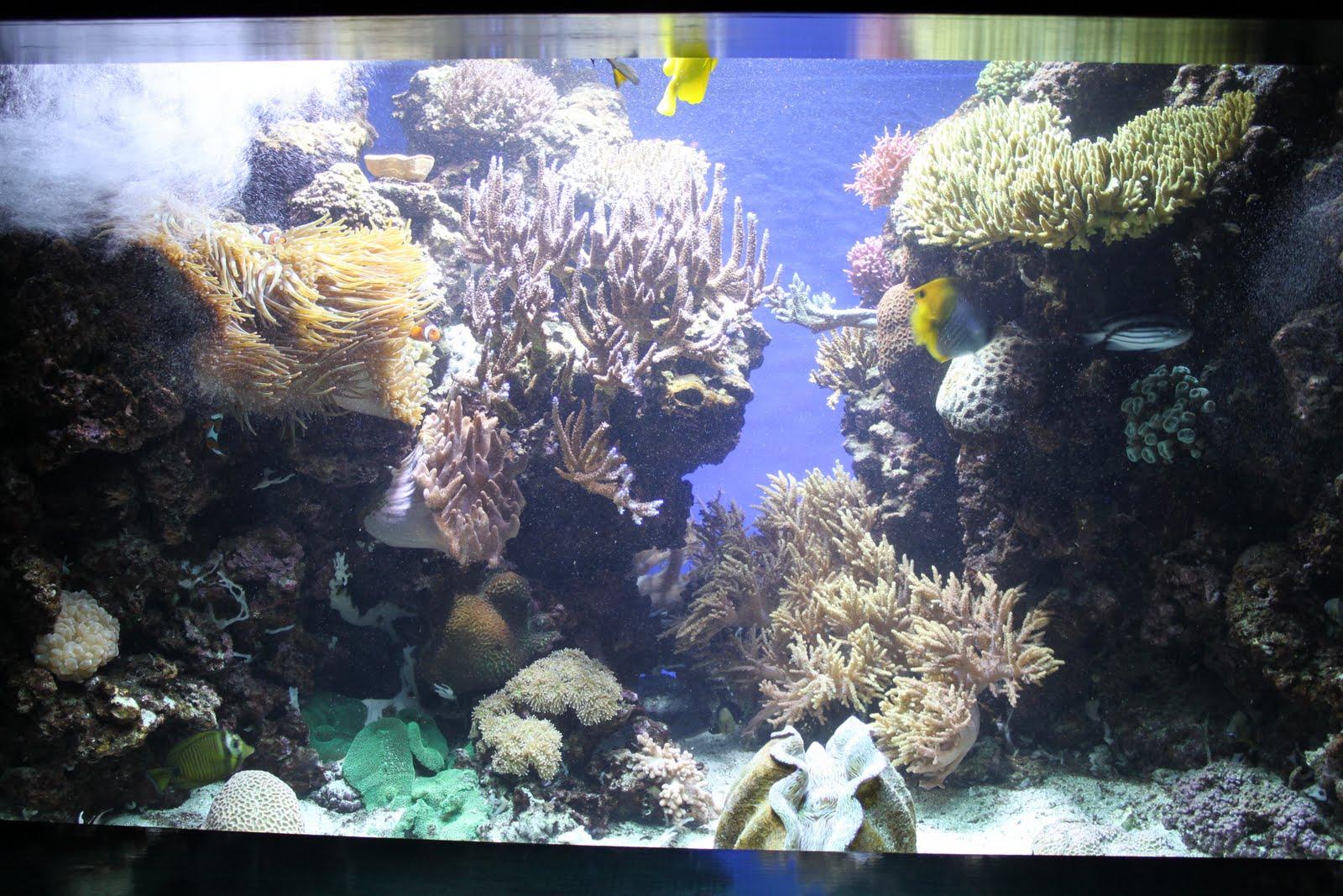 The Aquariums Kure Beach Pine Knoll Shores A Guide