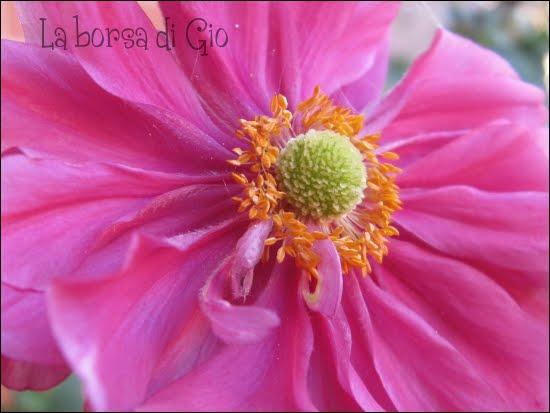 La borsa di gio anemone giapponese for Anemone giapponese