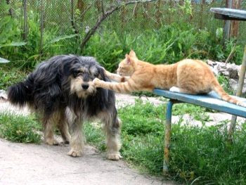 Animals fight.