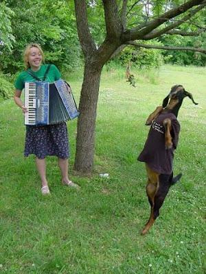 Dances of a goat.