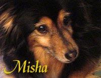 Sito web dei cani di razza da adottare!!
