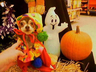 Mardy Dog Clown Costume