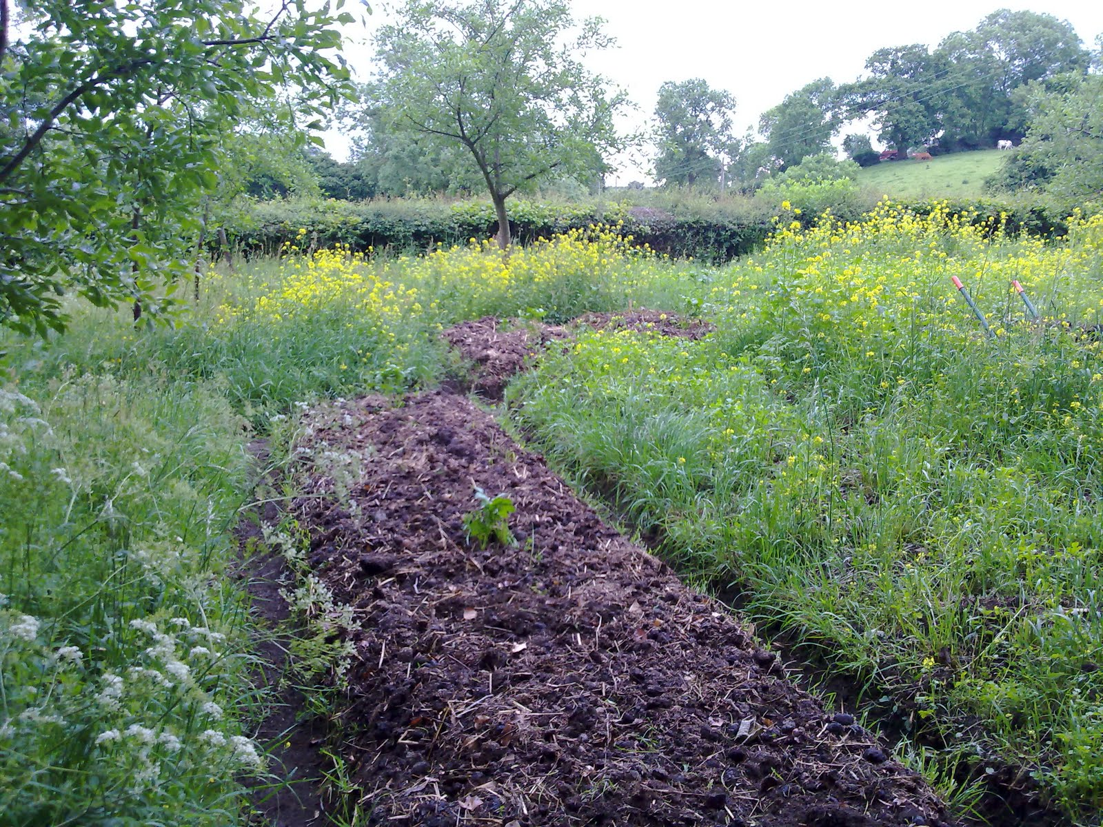 Horse Manure Permaculture Garden In Yorkshire