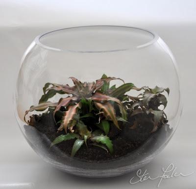 Bromeliad Terarium