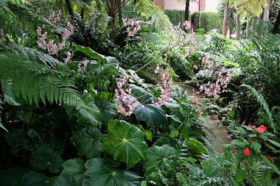 Succulent Garden Design on My Favorite Of The Gardens Is Of Course The Fern Garden A Whimsical