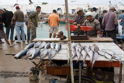 Марокко. Эль-Джадида. Порт и рыбный базар. Marocco. El Jadida