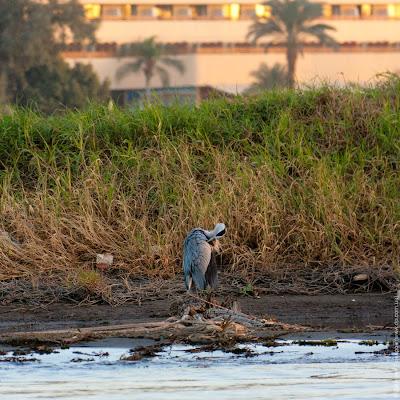 Египет. Нил