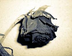 >:) trandafirul otravit