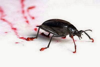 Phenomenal_Cockroach_Art_2