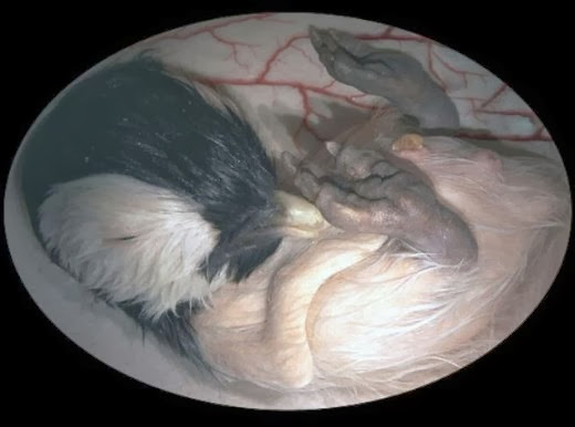 Embryotic_Animal_Pictures_2