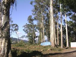 bosque de la Poza
