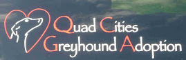 Quad Cities Greyhound Adoption