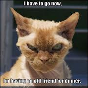 Dinner Anyone? =^..^=