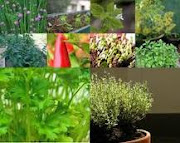 As Ervas dos Orixas e suas Serventias medicinais