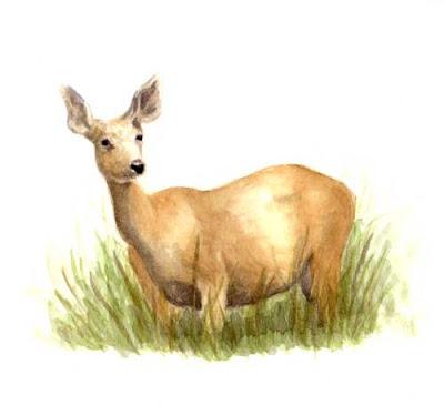 Painting Mule Deer